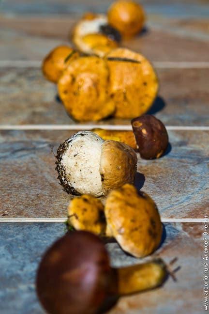 Что приготовить из грибов?.. - фото