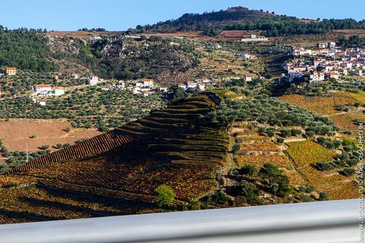 Вина Португалии - фото