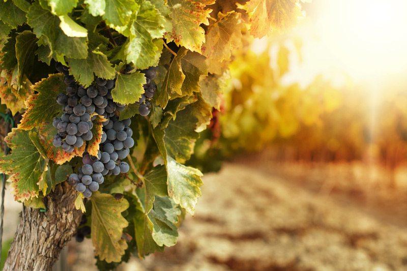Российским винам - защищенное географическое наименование - фото