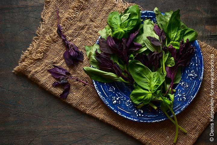 О зеленых овощах - фото